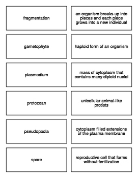 Protists Flash Cards for Biology II