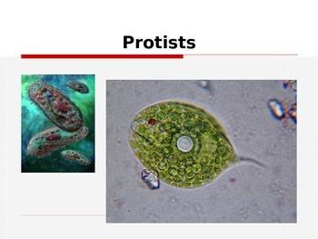 Protists & Fungi Power Point Presentation