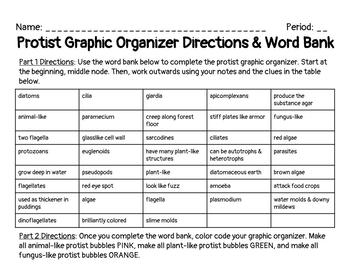 Protists Graphic Organizer
