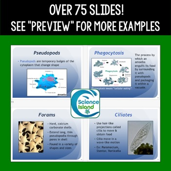 Protists PowerPoint and Notes