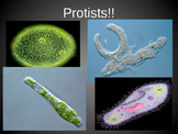 Protists Powerpoint