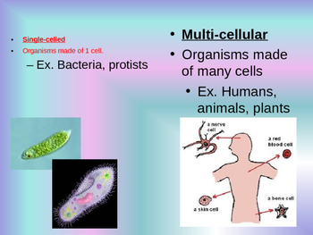 Protists End of Year Review Powerpoint