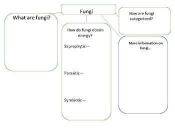 Protists and Fungi Graphic Organizers
