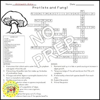Protists and Fungi Science Crossword Puzzle Coloring Worksheet Middle School