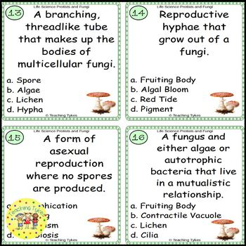Protists and Fungi Task Cards