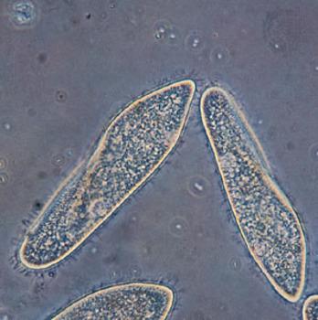 Protozoa Lessons