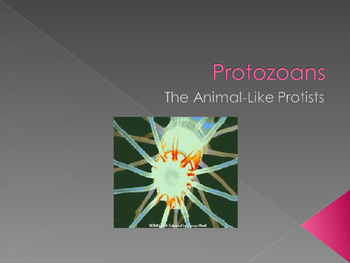 Protozoa Powerpoint Notes, Student Version