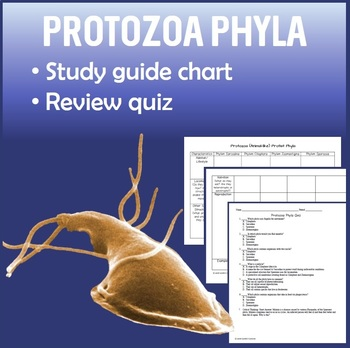 Protozoa Protist Phyla Study Guide Chart with Quiz