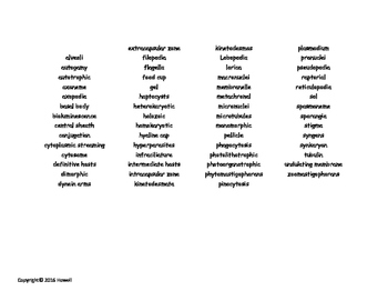 Protozoans Vocabulary Word Search for Invertebrate Biology