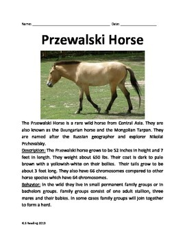Przewalski Horse - Informational Article Questions Review Vocabulary