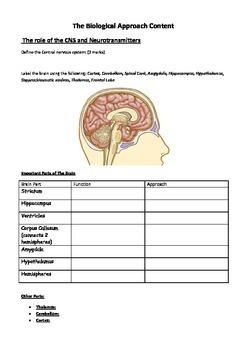 Psychology - Biological Approach