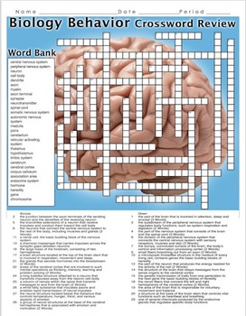 Psychology: Biology and Behavior Crossword Puzzle