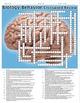 Psychology: Biology and Behavior Crossword Puzzle