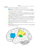 Psychology- Brain and Behavior Unit
