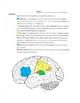 Psychology- Brain and Behavior Unit