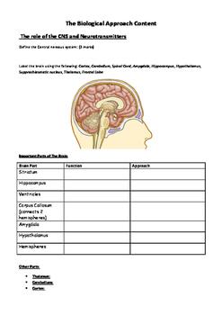 Psychology - Central Nervous System Workbook