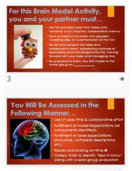 Psychology: Collaborative 3D Brain Activity! Reflective, Engaging Evaluation