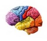 Psychology- Internet Brain Activity
