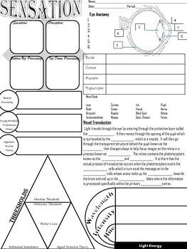 Psychology Sensation Unit Graphic Organizer for eye & ear anatomy & key concepts