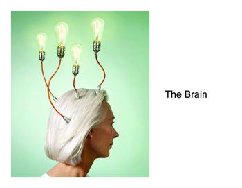 Psychology: The Nervous System (Presentation)