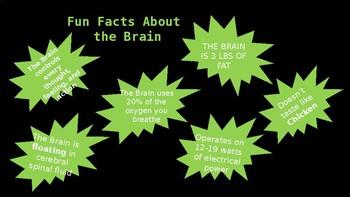 Psychology - Unit 2 - Brain Structure