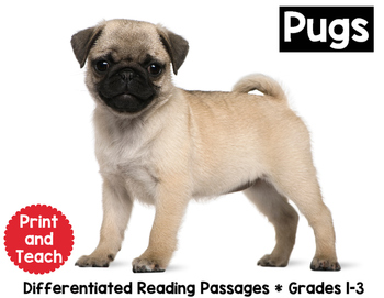 Pug Reading Passage