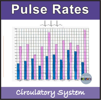 Circulatory System: Pulse Rates