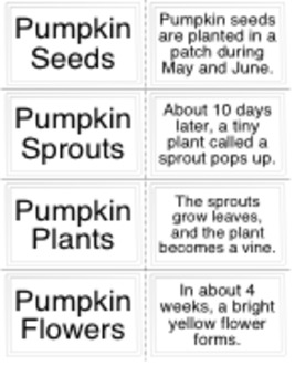Pumpkin Activities: Comprehension and Pumpkin Life Cycle