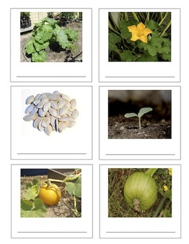 Pumpkin Circle - Literacy Activity