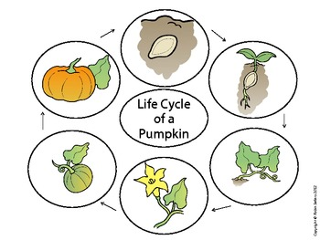 Bewitching image regarding life cycle of a pumpkin printable