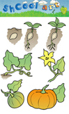 Pumpkin Cycle