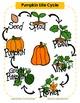 Pumpkin Detectives- A Mini-Science Unit