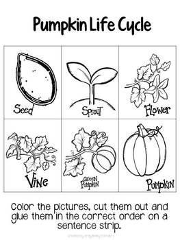 Pumpkin Exploration Activities