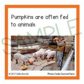 Pumpkins Unit Activity - Fun Fact Cards for Games, Bulletin Board