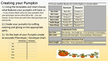 Pumpkin Family Genetics (gentoype, phenotype, traits, punnett squares)