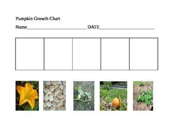 Pumpkin Growth Cycle