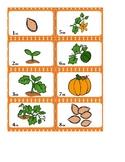 Pumpkin Inquiry Activities