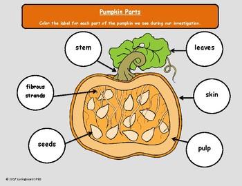 Pumpkin Investigation Packet