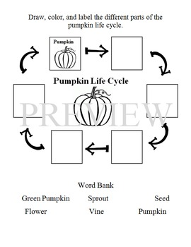 Pumpkin Journal