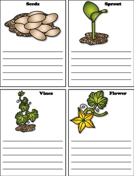 Life Cycle of a Pumpkin Foldable Activity: Seeds, Sprout, Vines, Flower, etc.