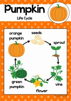 Pumpkin Life Cycle