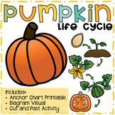 Pumpkin Life Cycle - Cut and Paste/Anchor Chart Visual
