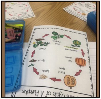 Pumpkin Life Cycle Activities and STEAM Unit