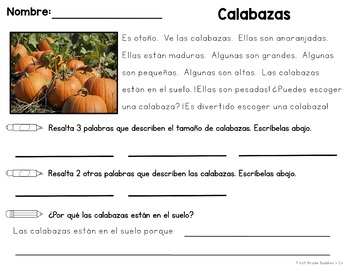 Pumpkin Reading Comprehension | Pumpkin Lifecycle | Pumpkin Activities