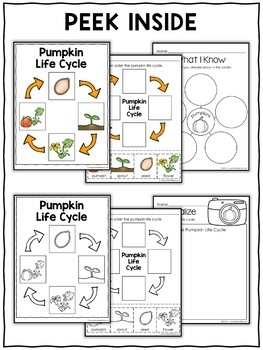 Vocabulary Activity - Pumpkin Life Cycle