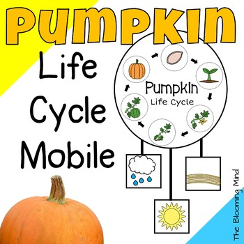 graphic regarding Pumpkin Life Cycle Printable named Pumpkin Lifetime Cycle Recreation