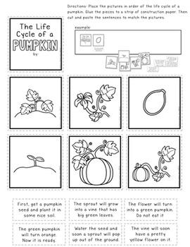 Pumpkin Life Cycle Anchor Chart Kit