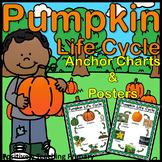 Pumpkin Life Cycle | Anchor Charts | Posters