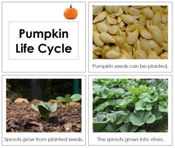 Pumpkin Life Cycle Book - Toddler