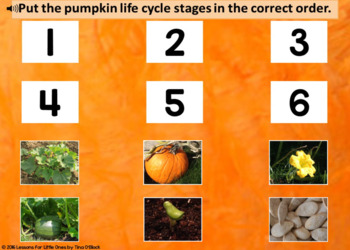 Pumpkin Life Cycle Boom Cards Free Life Cycle of a Pumpkin Distance Learning